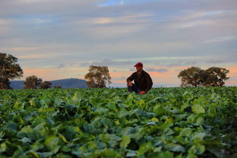 Canola Farmer NSW
